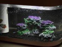 小米这款养鱼神器,轻松排水自带供氧且一键喂食,你一定心动了吧